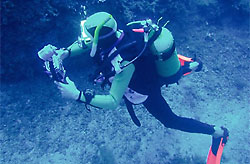 Sport on the island of Elba: diving and under water excursions
