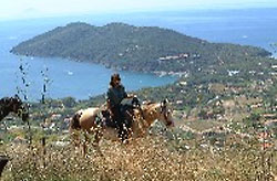 Sport on the island of Elba: horse riding